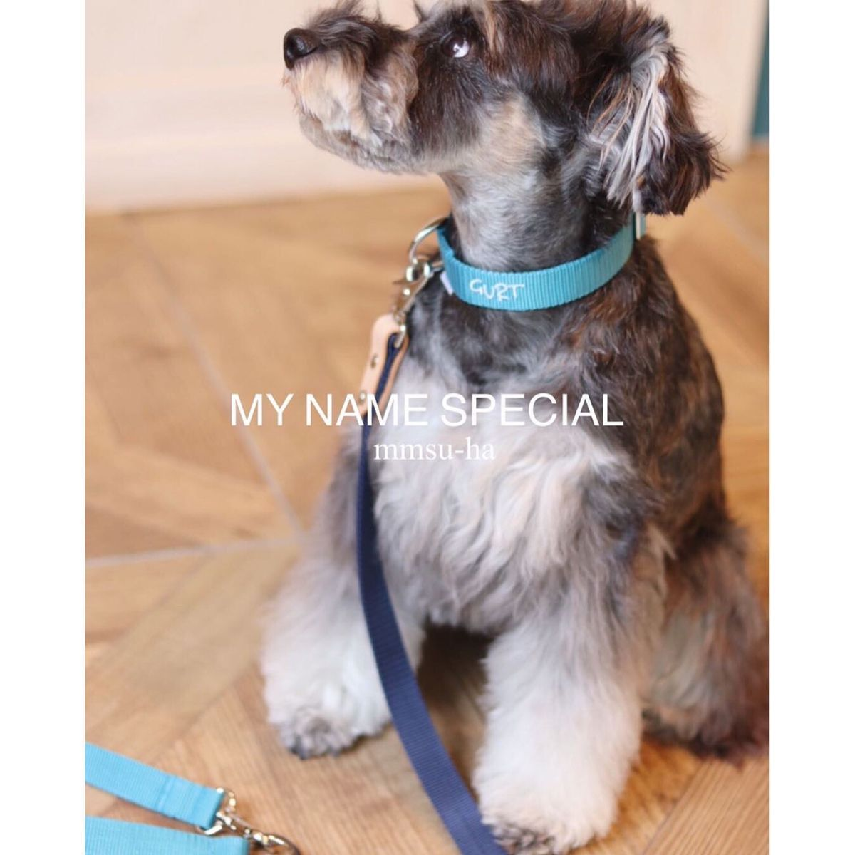 Mmsu Haが贈る首輪 My Name 犬 シュナウザー 革 犬 シュナウザー 首輪 犬