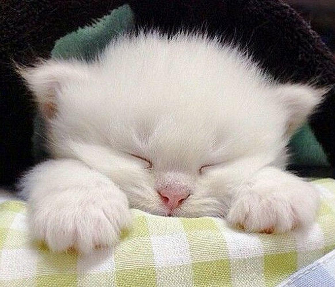 Днем, всем спокойной ночи картинки красивые