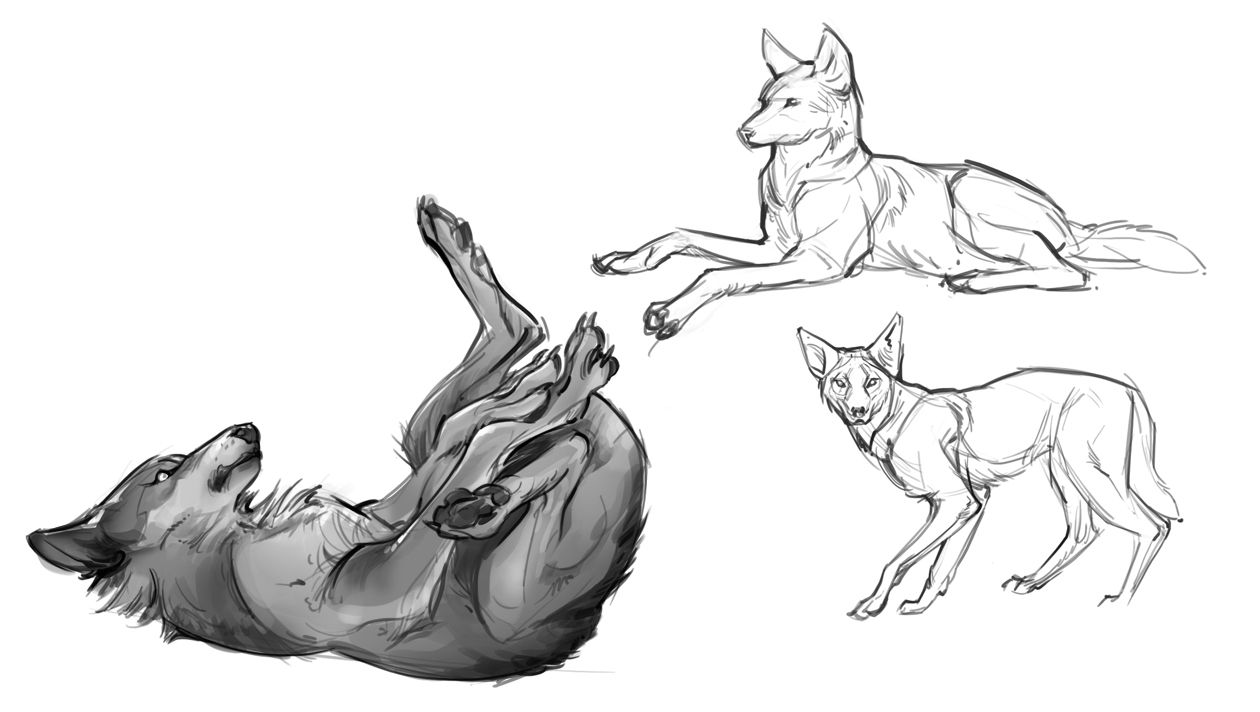 wolf front poses - 736×415