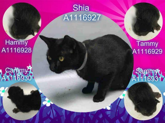 Super Urgent Cats Cat Adoption Kittens Cats