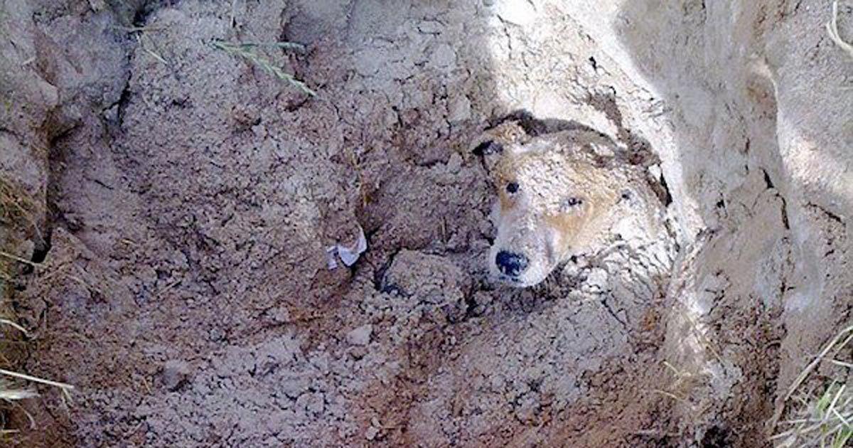 Lily era uno de los muchos perros callejeros. Lily vivía de la basura que encontraba en la calle, pero debido a que tenía las patas traseras paralizadas, lo tenía más difícil que otros perros.