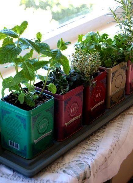 in Tea Tins,  Herb Garden in Tea Tins, Herb Garden in Tea Tins,   Horta em Casa: 20 Modelos Incrív