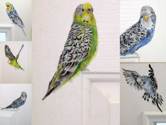 Budgie Wall Stickers Set Of 5 Budgie Decals Bird Wall Decals