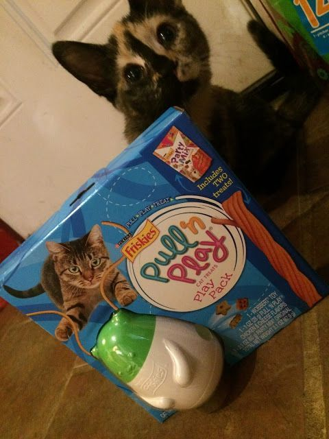 Western New Yorker: Friskies NEW Pull N Play toy for your Cat #MostPlayfulCat