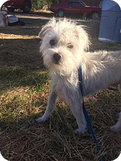 Vacaville Ca Terrier Unknown Type Medium Maltese Mix Meet Chase A Dog For Adoption Cute Dogs