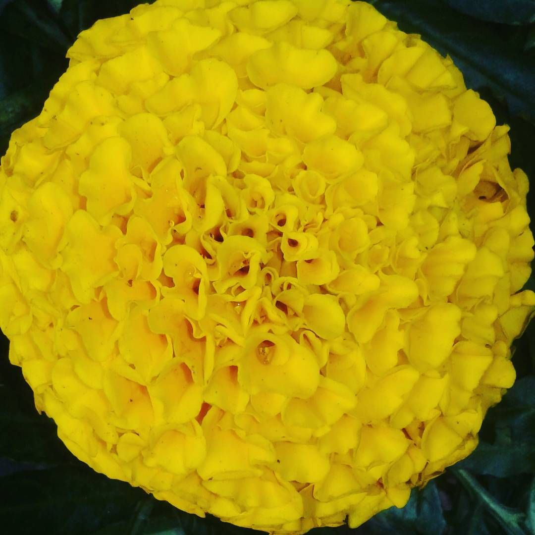 Shades Of Yellow Color Names For Your Inspiration Going To Tehran Shades Of Yellow Color Catalog Color Shades
