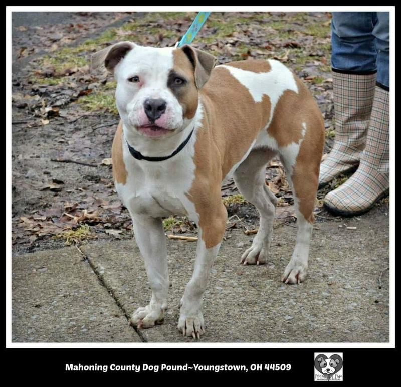 Adopt 7 Hillary 1 Adopted On Dog Sounds Adoption