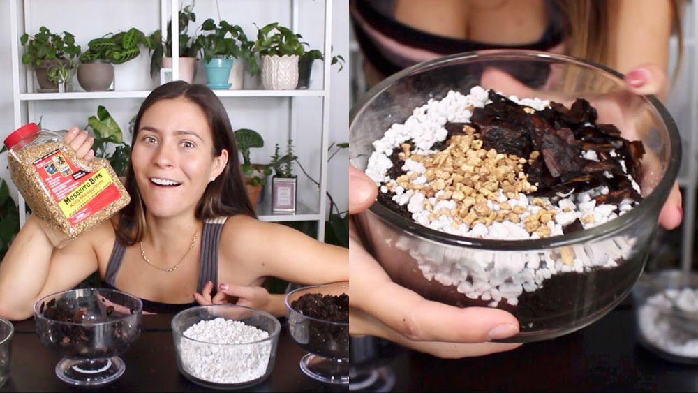 Potting Soil Mixture For Indoor Plants Indoor Plant Soil 400 x 300