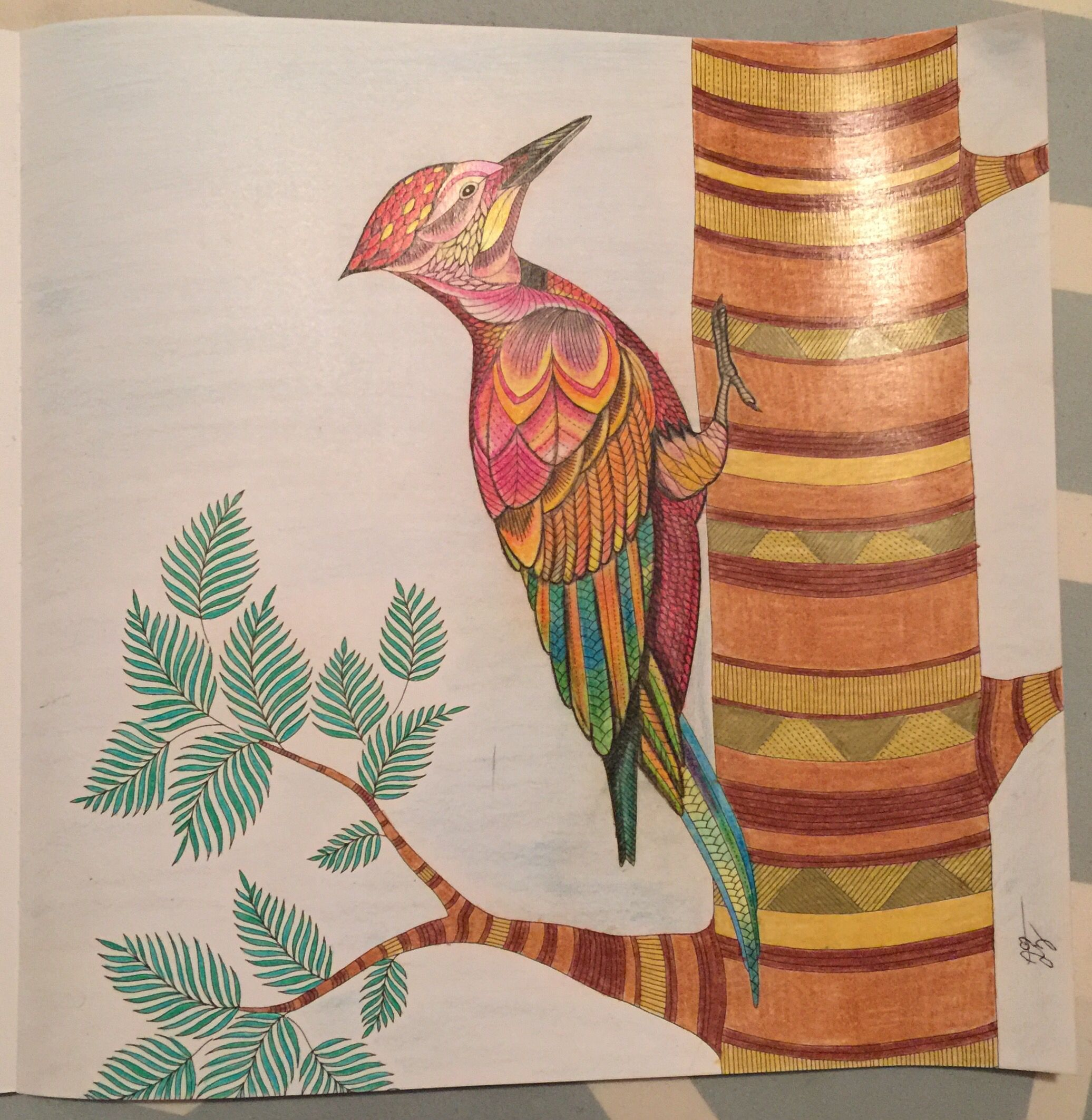 Color me draw me animal kingdom book - Bird Carpenter Bird Animal Kingdom Millie Marotta Birds Color Me Draw