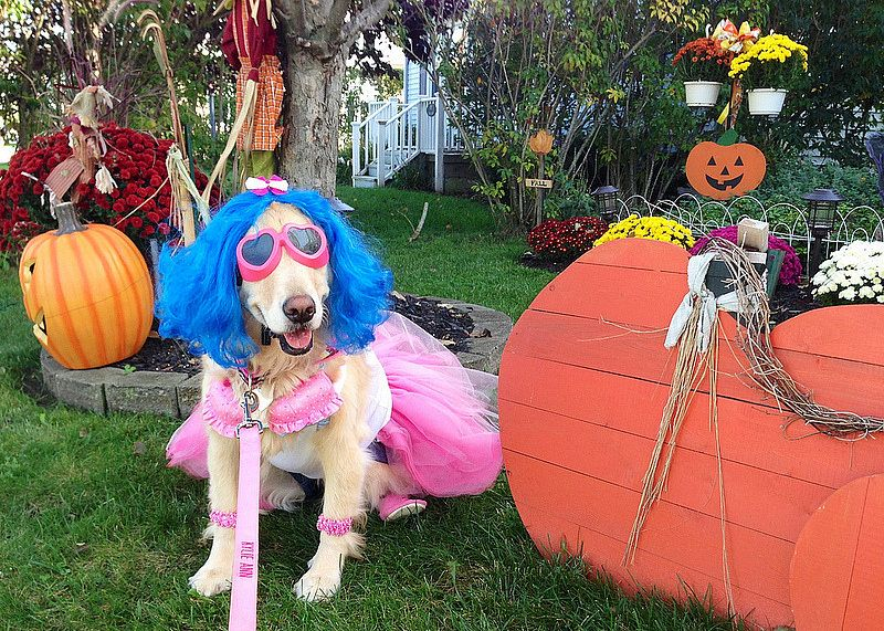 60 Pet Costumes To Diy On The Cheap Pet Costumes Puppy