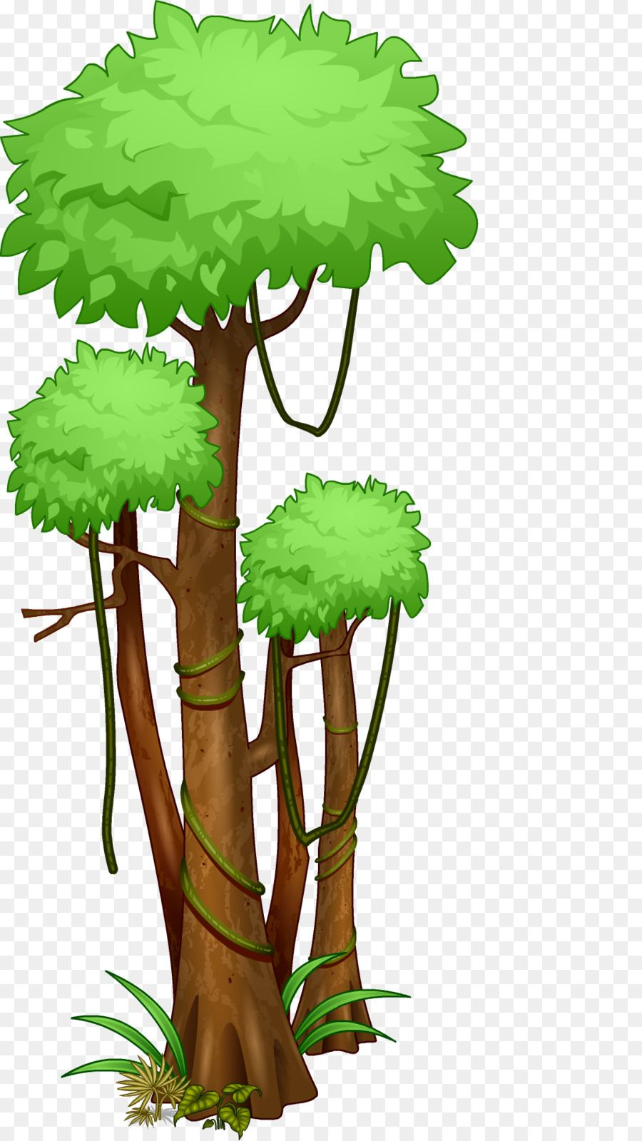 Pin By Loria On Clipart Rainforest Trees Jungle Tree Tropical Tree