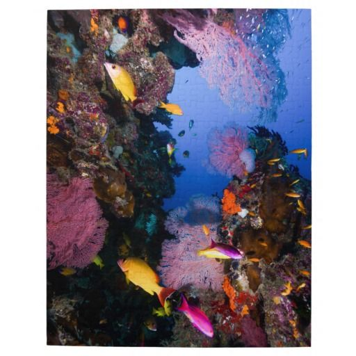 Amazing jigsaw puzzle featuring an awesome array of colorful tropical fish and beautiful coral on Australia's Great Barrier Reef. #coral #reef #ocean #sea #diver #tropicalfish #greatbarrierreef #coralsea #coralreef #nature