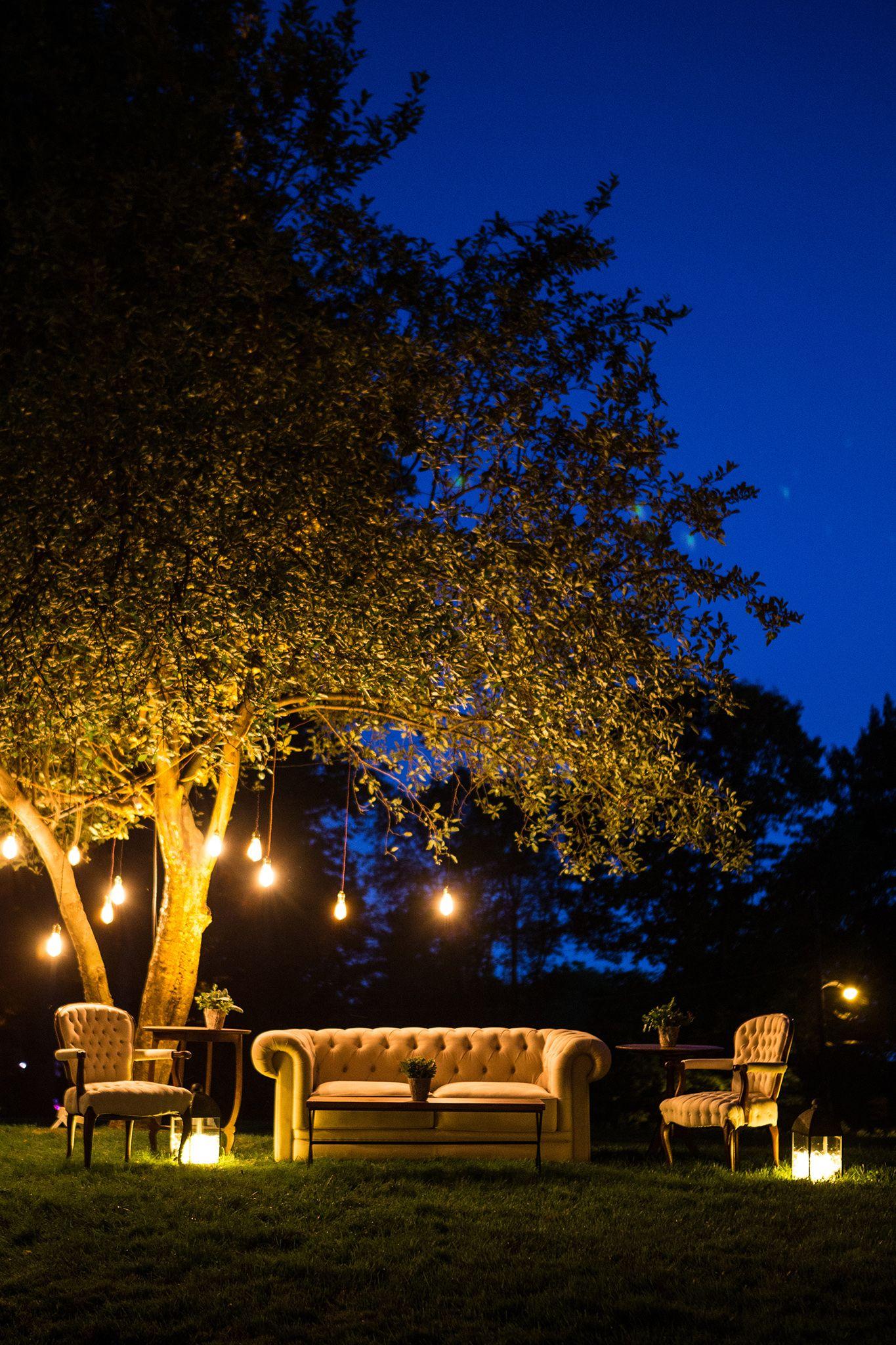 Photo By Dola Photography Dolaphoto Com Hanging Lights In Trees Hanging Lights Tree Lighting Hanging Edison Lights
