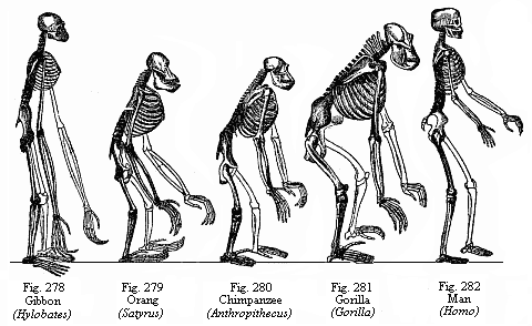 from Gavin dating techniques human evolution