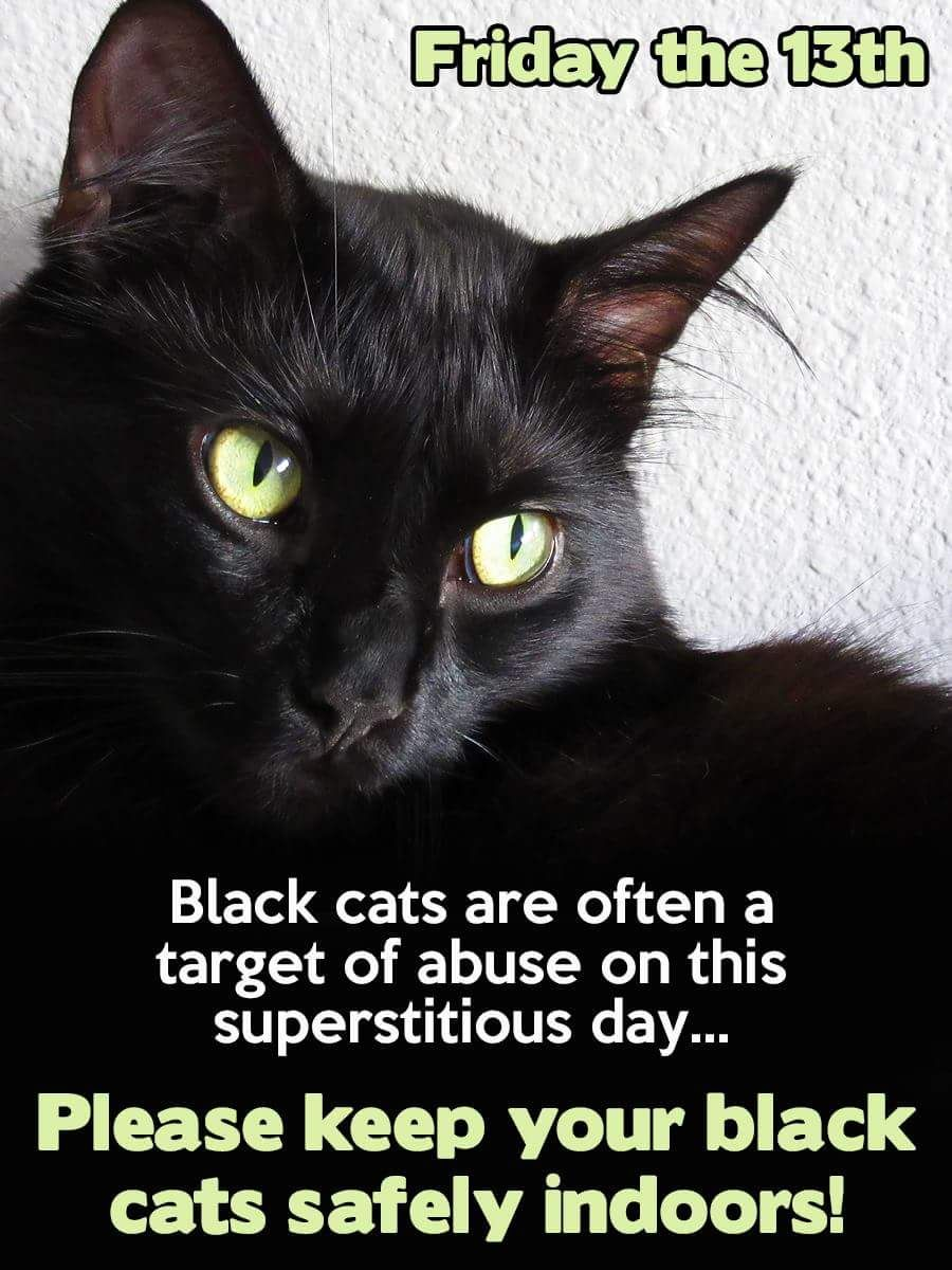 Please keep black cats safe on Friday the 13th Black cat