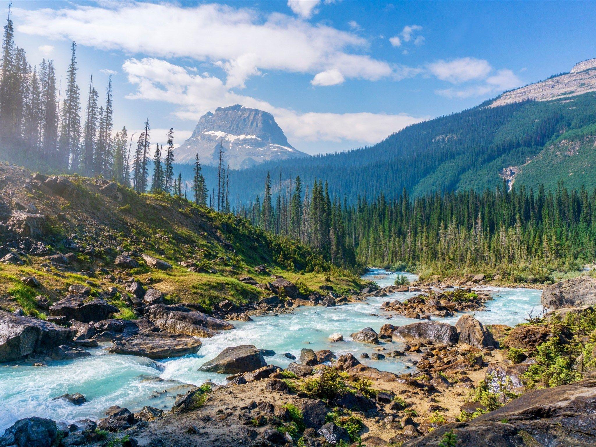 Riviere De Montagne L Ete La Foret Les Arbres Les Aiguilles De Pin Canada Paysage De Montagne Canada Paysage Paysage Riviere Paysage Montagne
