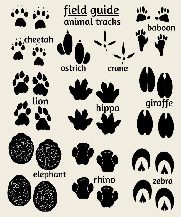 Jungle Nursey Art, Field Guide Animal Tracks