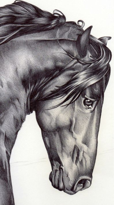 Horse Symbol Of Freedom And Of The Wind No Other Animal Has