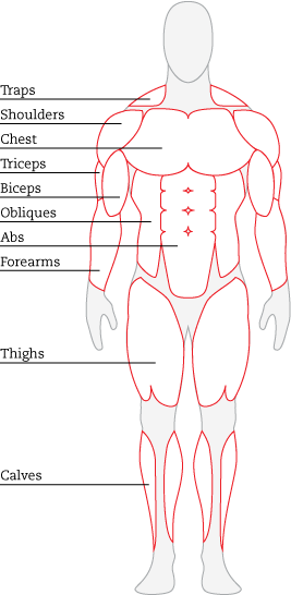 Front Anatomy Human Body Systems Easy Science Human Body Drawing