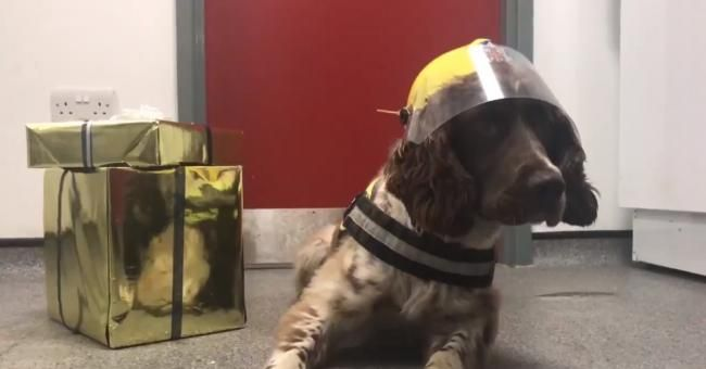 Woodie The Fire Dog Is The Star Of The New County Durham And