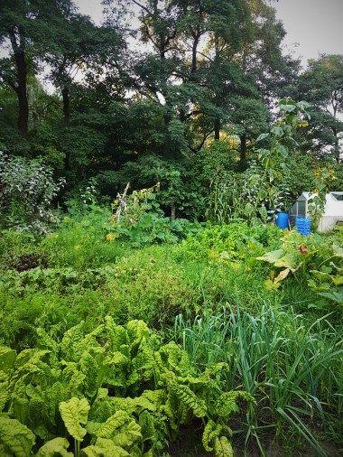 Wie 3 Tage pro Monat Gartenarbeit reichen um meine Familie selbst zu versorgen