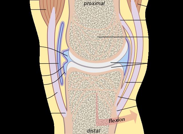 La artrología es el estudio formal de la anatomía, fisiología ...