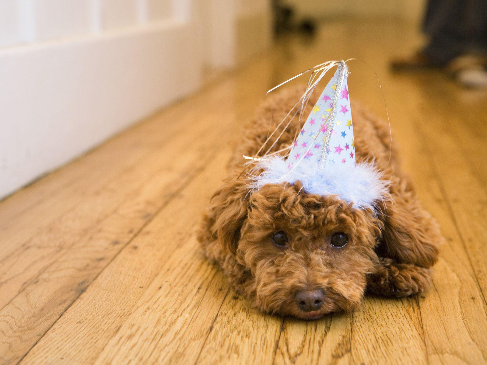 animals wearing birthday hats - photo #25