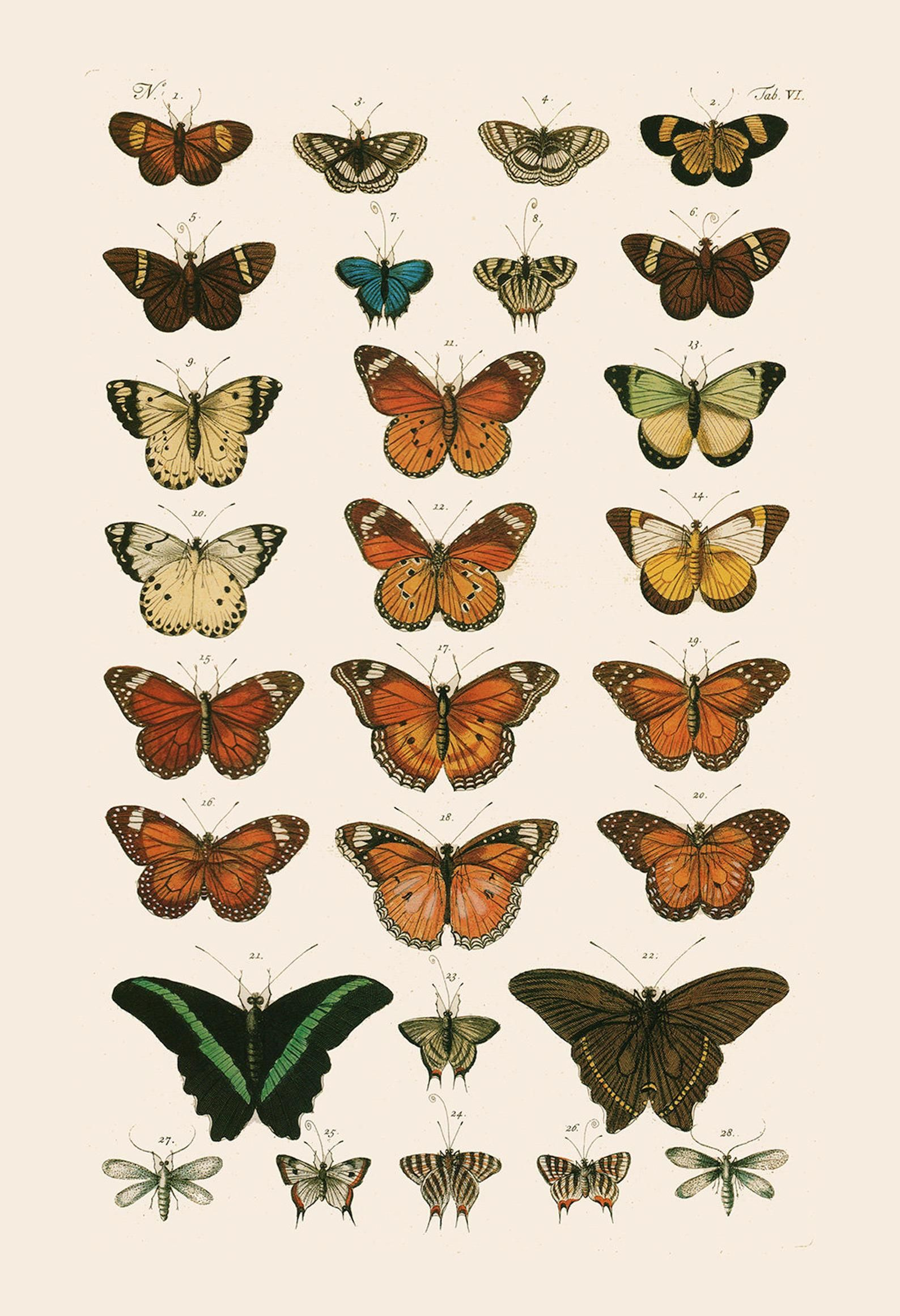 VINTAGE BUTTERFLY PRINT- High Quality Reproduction