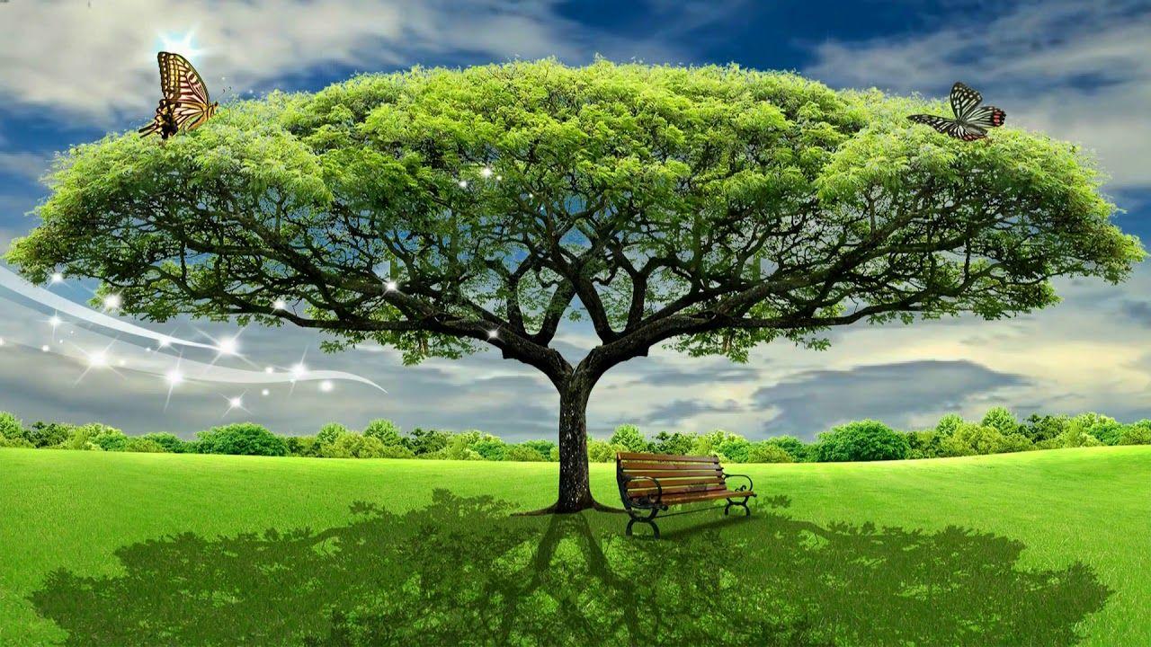 Hd 1080p Beautiful Tree Nature Scenery Video Royalty Free Landscape Vid Scenery Landscape Beautiful Tree