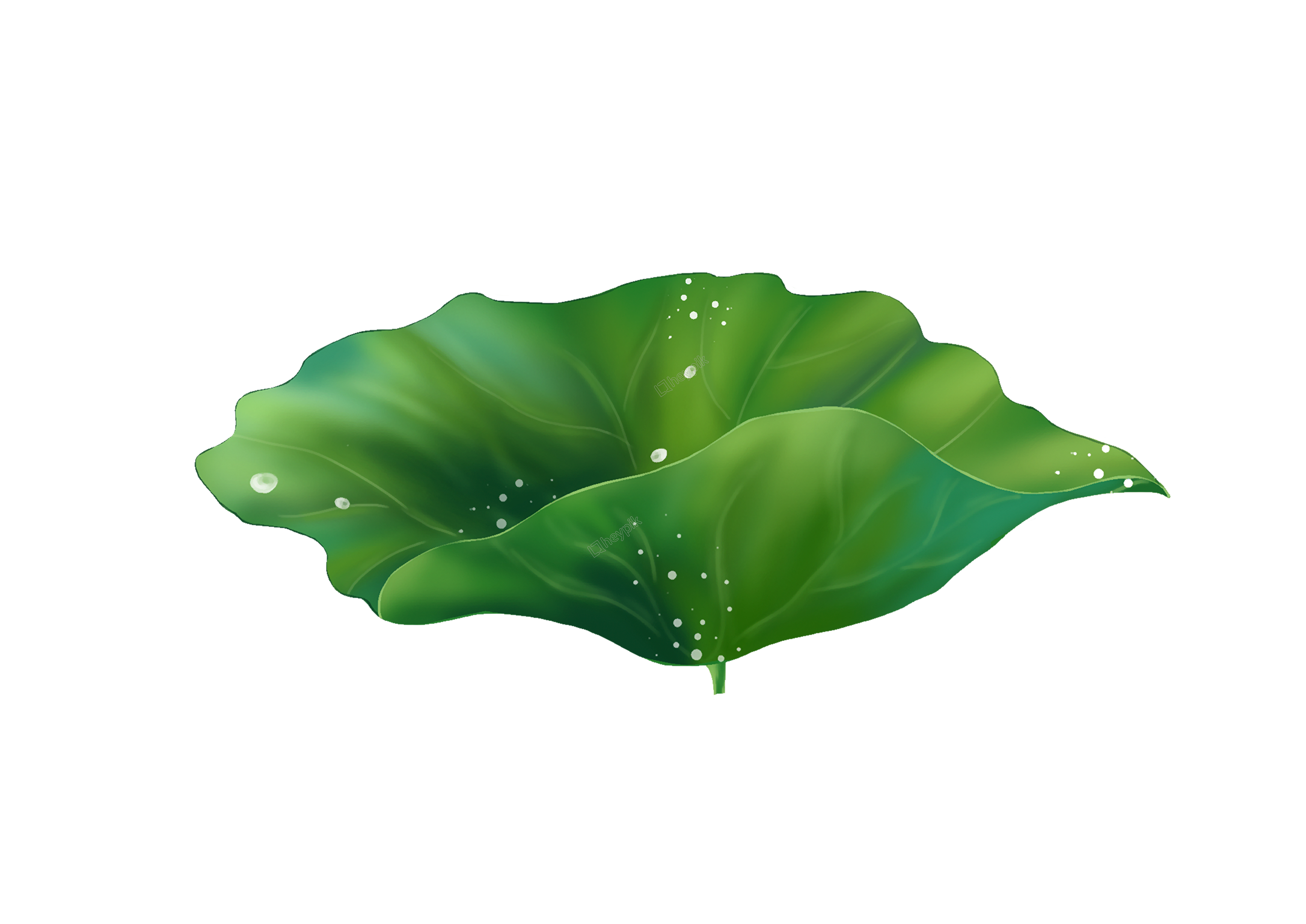 hand draw cartoon delicate lotus leaf png vector