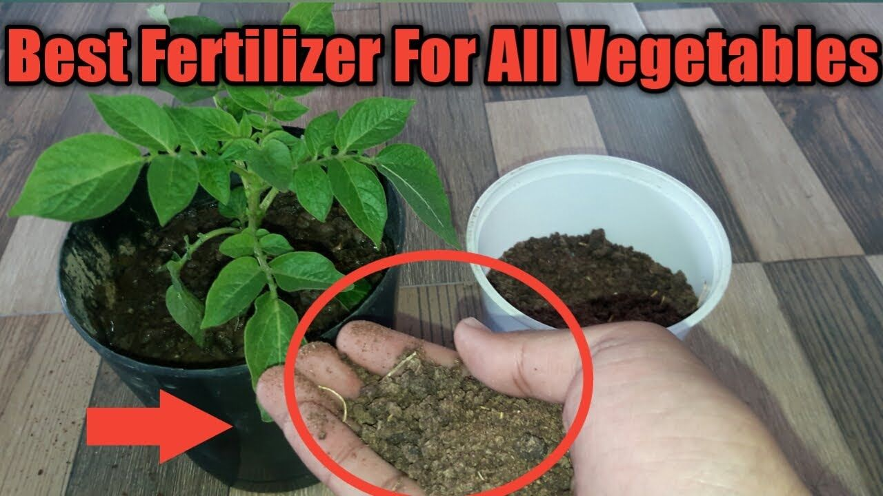 How To Use Mustard Cake Organic Fertilizer For Any Plants Homemade Org Organic Cake Flower Fertilizer Fertilizer For Plants
