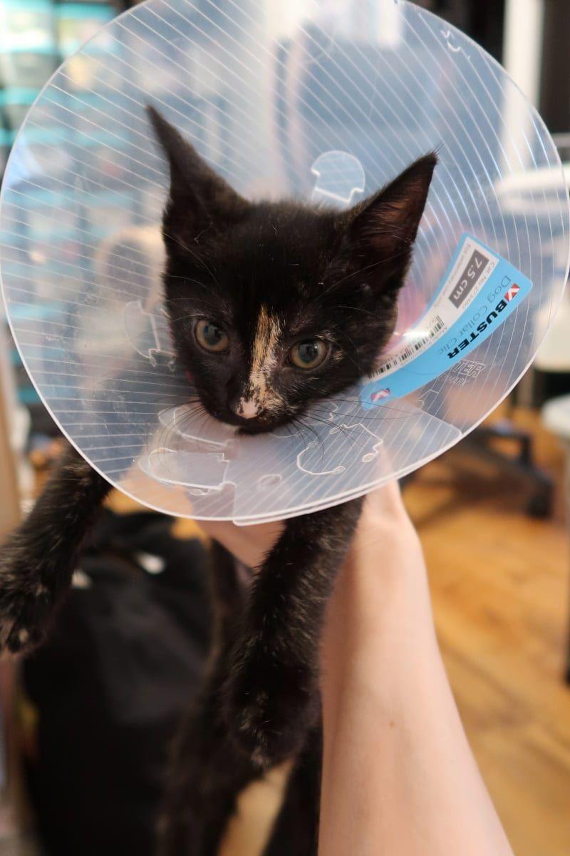Kitten Sock Onesie Diy Craft For Your Furbabies After Spay Neuter Day Cat Neutering Kitten Socks Fur Babies