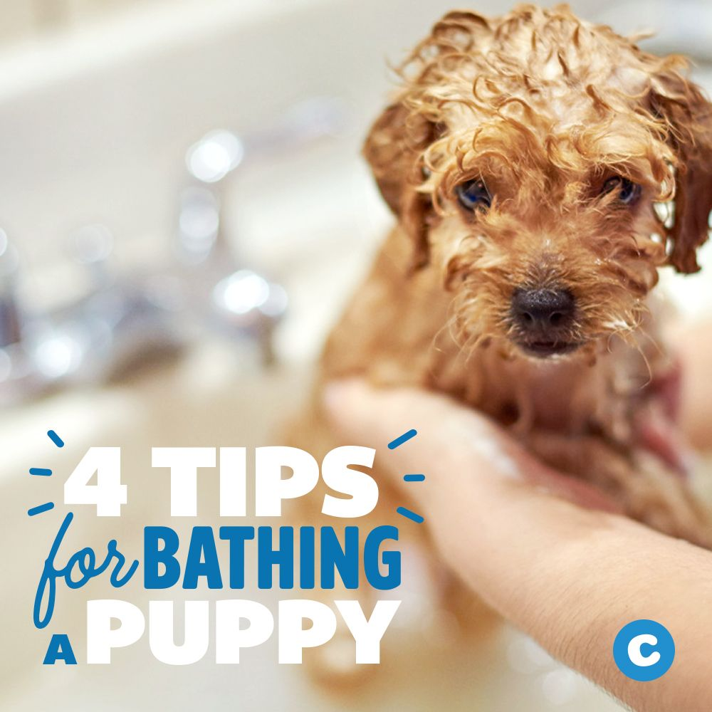 Tips For Bathing A Puppy Bathing A Puppy Puppies Puppy Grooming