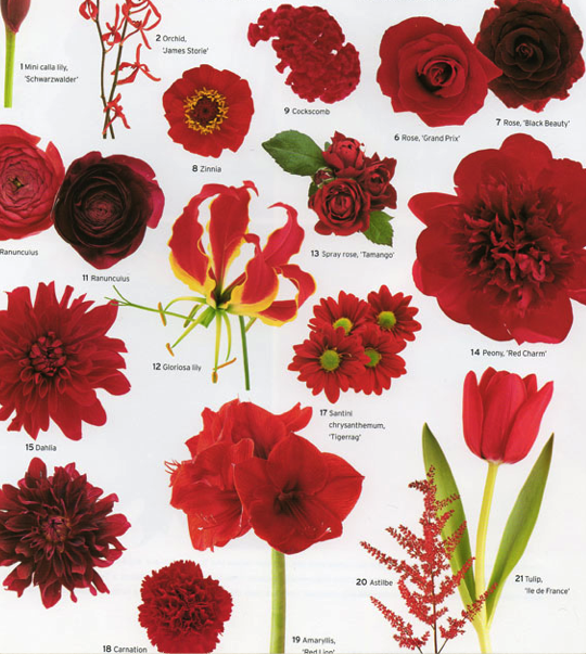 Wedding Flowers By Color Red Courtesy Martha Stewart Weddings Plan Vintage Wedding Flowers Red Wedding Flowers Flower Guide