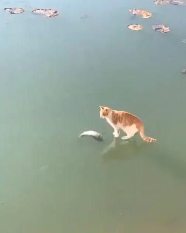 Derp fishing