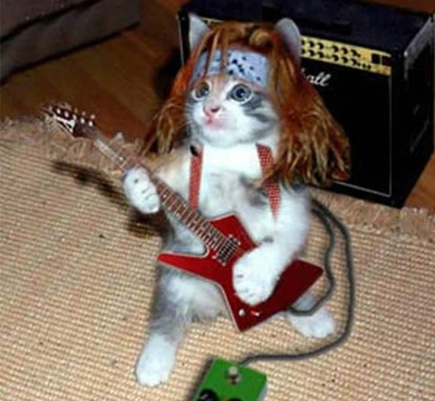 Funny Animals Funny Animals Playing Guitar 5570 Funny Animal Pictures Cats Cute Animals