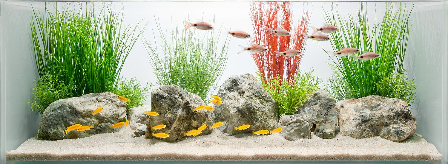Freshwater Aquarium Design Ideas the top 25 ranked freshwater aquariums in the world twistedsifter Aquarium Design Group The Soft Effect Of A Coceptual Decorative Freshwater Aquarium