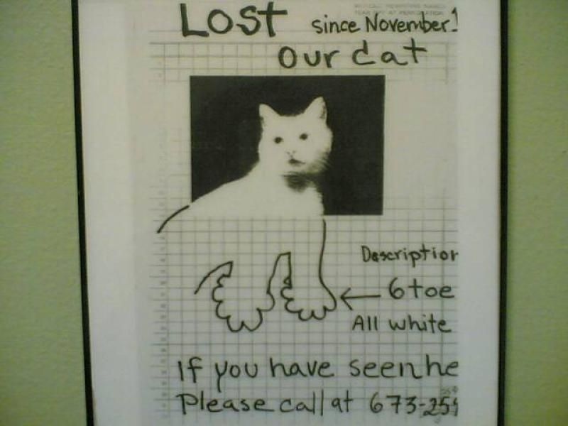 lost pet posters funny - Google Search | Lost | Pinterest | Funny ...