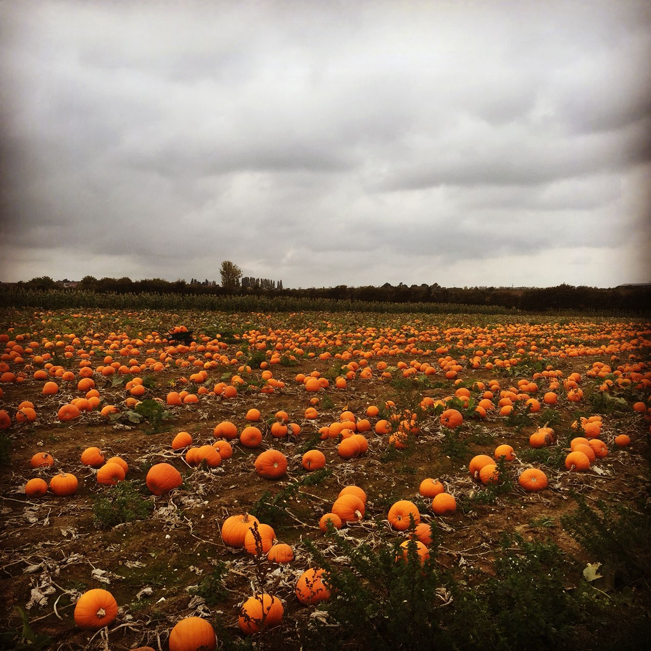 Pick your own Hoo Kent Autumn inspiration, Fall vibes