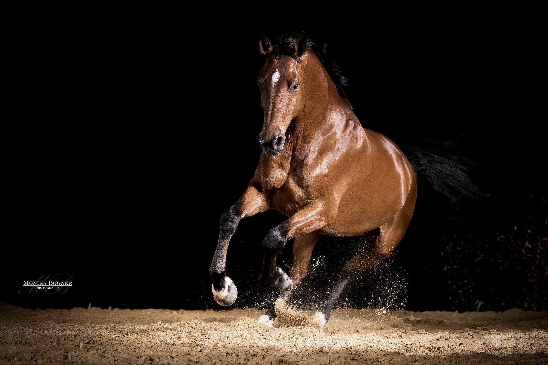 Pferde im Studio Monika Bogner Photography