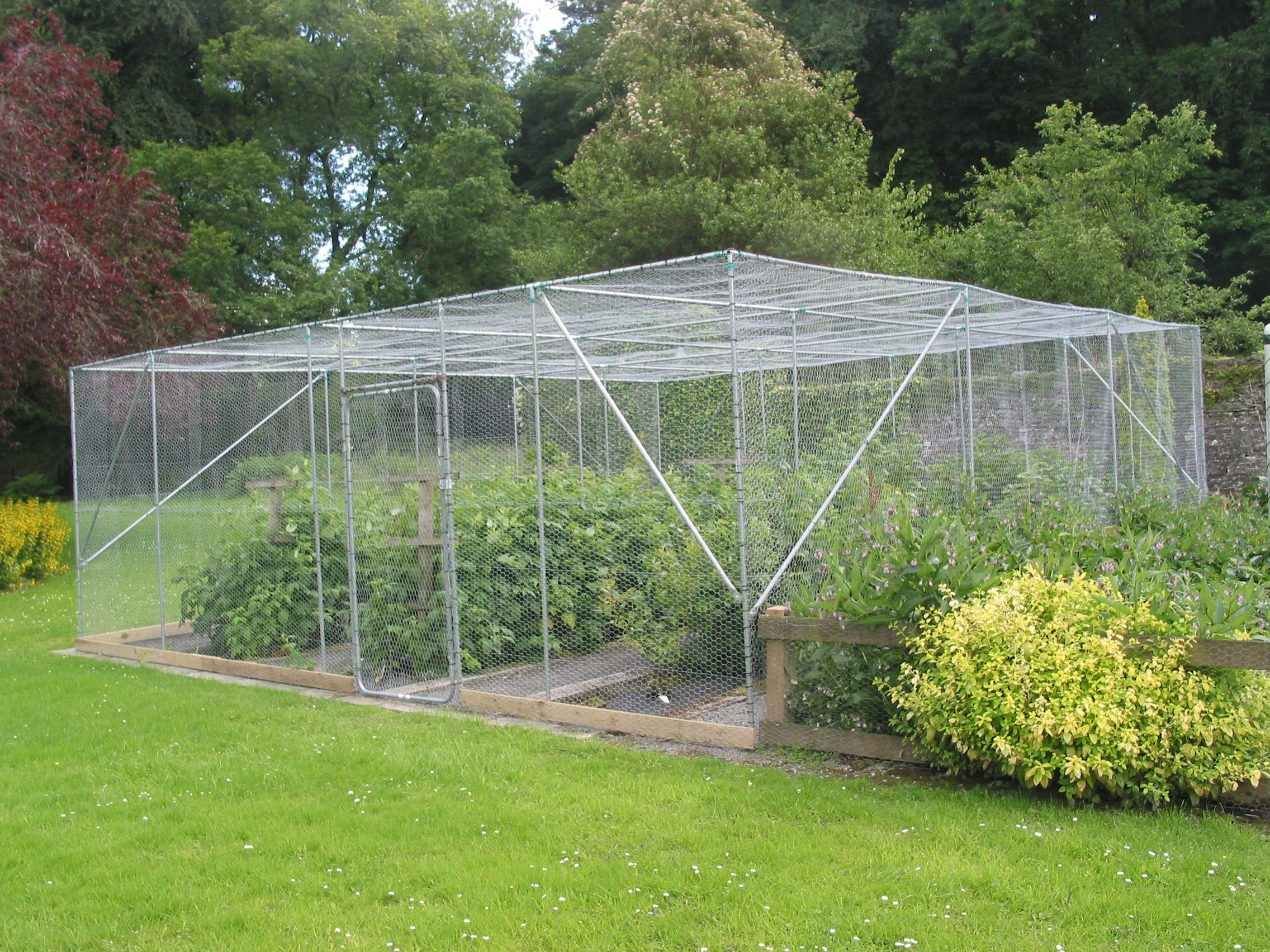 Large fruit cage | Garden yard ideas, Fruit tree garden ...