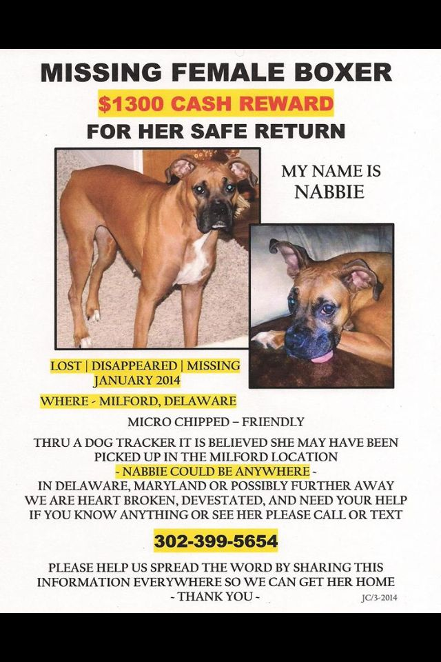 Please Please Repost My Neice S Pet Thank You Animals For Kids