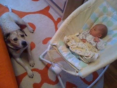 Baby in a cradle next to a dog who is laying on an orange and white rug