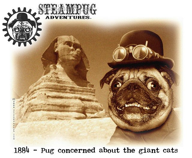 Steampug In Egypt Pugs Giant Cat Dog Life