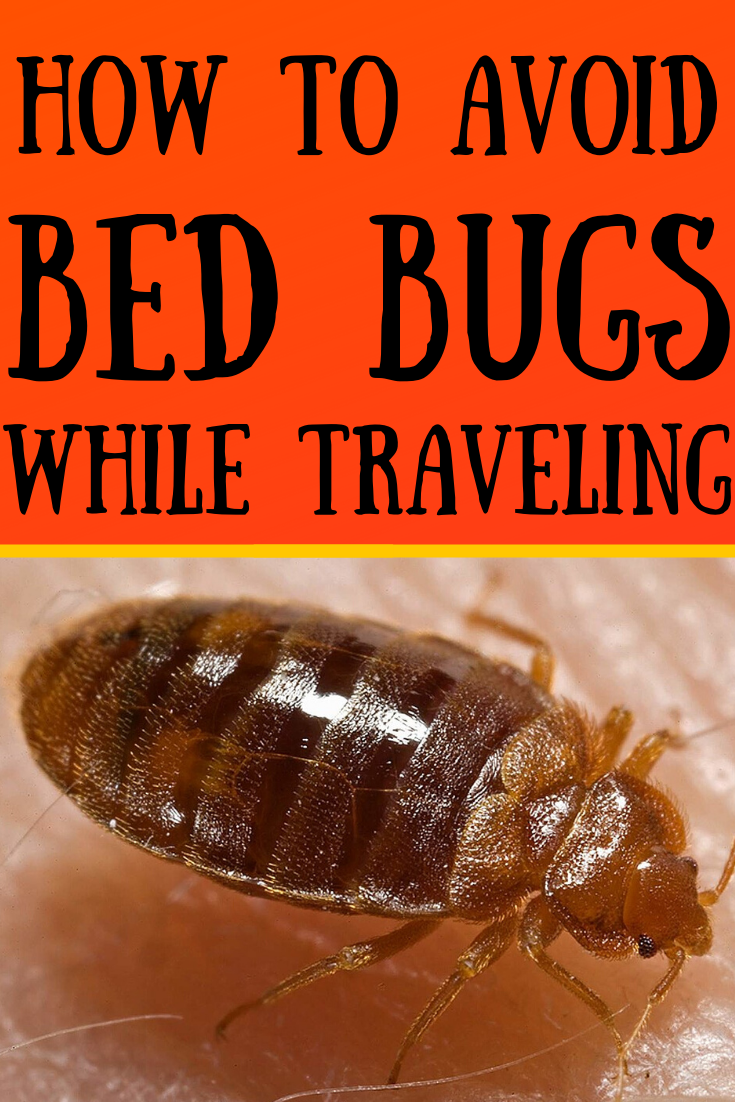 aa6015a5ebeb10186e56e8dfb558a66d - How To Get Rid Of Bed Bugs While Backpacking