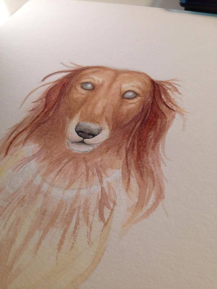 Sparky the dachshund <3  Se more on: https://www.facebook.com/DrawDoodlesStudy  #drawing #dog #watercolor