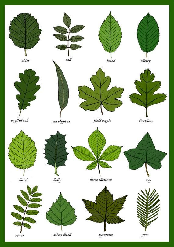 Leaves Greetings Card - Leaf Identification Chart