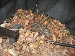 hedgehog home - Google zoeken