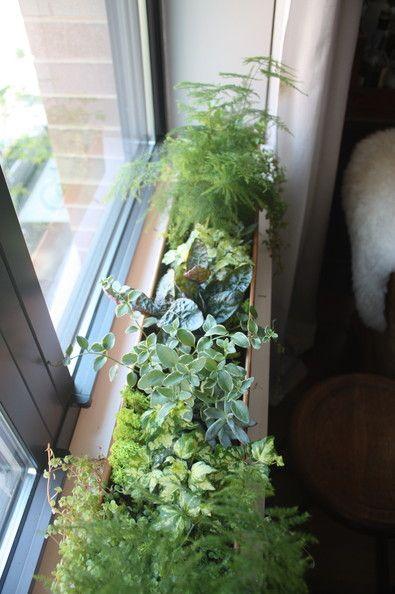 The Window Whiting Garden Garden Boxes Window Boxes Garden