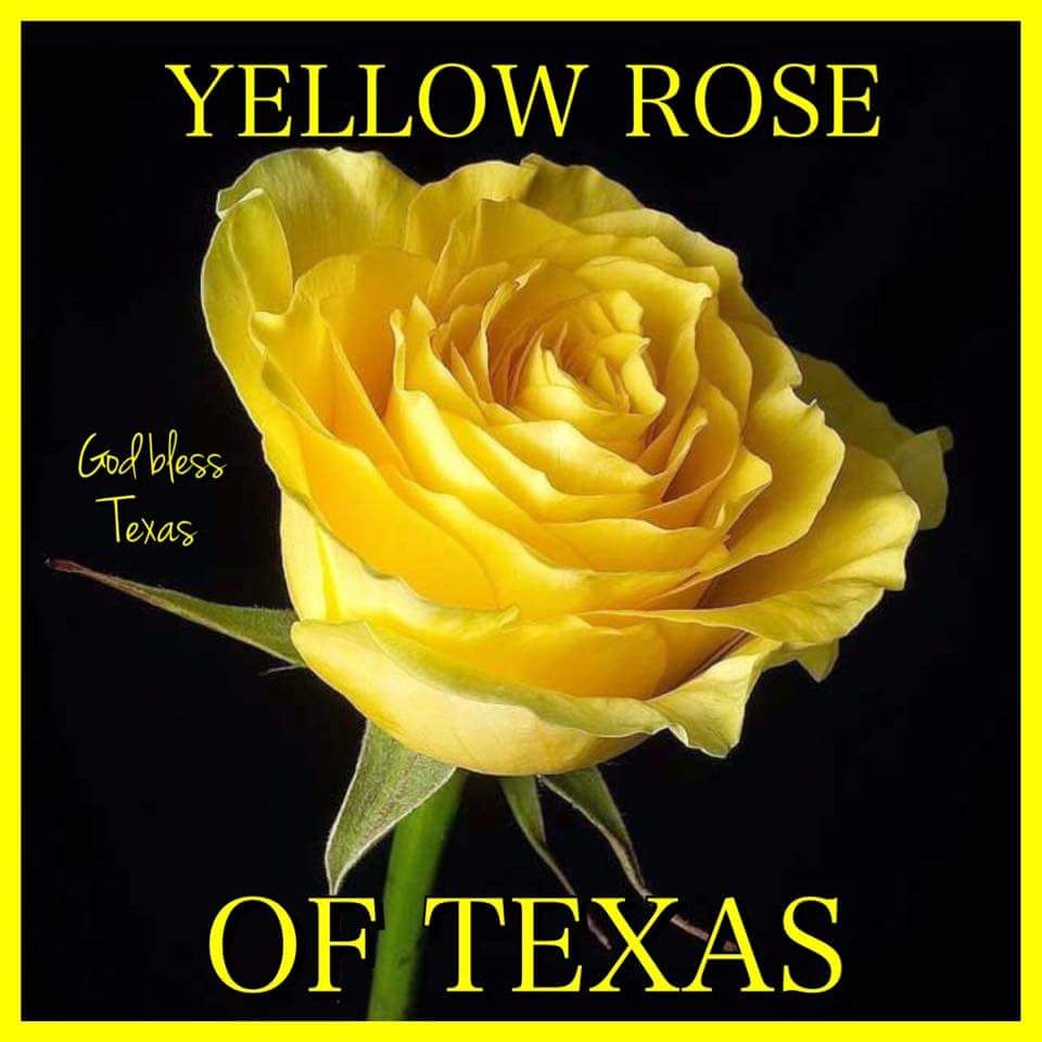 Yellow Rose Of Texas All Things Texas In 2018 Pinterest Yellow